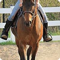 Adopt A Pet :: Faith - East Granby, CT