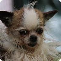 Adopt A Pet :: Itsy - South Amboy, NJ