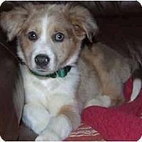 Adopt A Pet :: RASCAL - Plainfield, CT