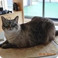 Adopt A Pet :: Mischief - Vancouver, BC