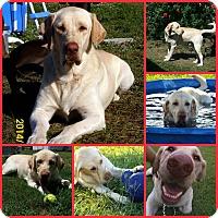 Adopt A Pet :: LENNY - Inverness, FL