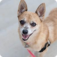 Adopt A Pet :: Rue - Homewood, AL