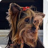 Adopt A Pet :: Princess 2-Adoption pending - Bridgeton, MO
