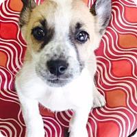 Adopt A Pet :: Malibu - Norwalk, CT