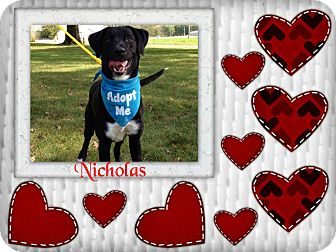 Lakeland Terrier Mix Dog for adoption in Buffalo, Indiana - Nicholas is ADOPTED