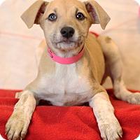 Adopt A Pet :: Iris - Waldorf, MD
