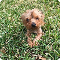 Adopt A Pet :: Bailey - Baton Rouge, LA