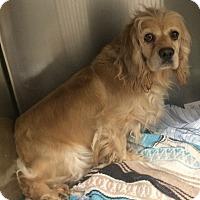 Adopt A Pet :: Julip - Oak Ridge, NJ