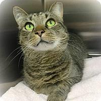 Adopt A Pet :: Boss - Webster, MA