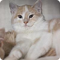 Adopt A Pet :: Briar - Carlisle, PA