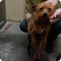 Adopt A Pet :: Punkin - Pikeville, KY