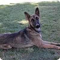 Adopt A Pet :: Silk - Mountain Center, CA