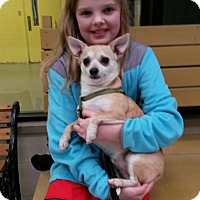 Adopt A Pet :: Tank - Elyria, OH