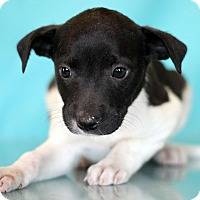 Adopt A Pet :: Costello - Waldorf, MD