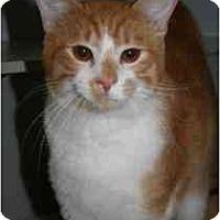 Adopt A Pet :: Scotty - Marietta, GA