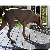Adopt A Pet :: Putty  **ADOPTED** - Eustis, FL