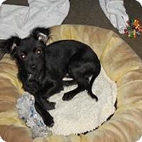 Adopt A Pet :: Elliott - Shawnee Mission, KS