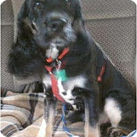 Adopt A Pet :: Danny - Sugarland, TX