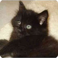 Adopt A Pet :: Blackberry - Richmond, VA