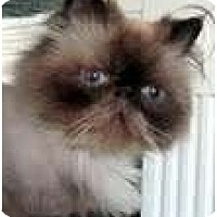 Adopt A Pet :: Grover - Arlington, VA