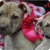 Adopt A Pet :: Allie - Toledo, OH