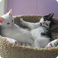 Adopt A Pet :: Snowcone - Atlanta, GA