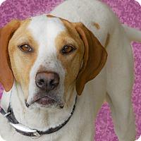 Adopt A Pet :: Remi purebred - Sacramento, CA