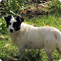 Adopt A Pet :: Georgia - Midway, GA