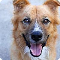 Adopt A Pet :: Milo - Austin, TX