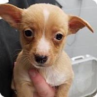 Adopt A Pet :: Sally - Paducah, KY
