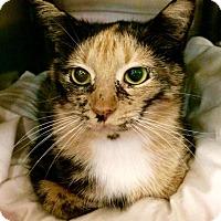 Adopt A Pet :: Alley - Greensburg, PA