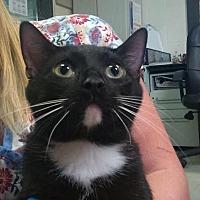 Adopt A Pet :: Antonia - Pensacola, FL
