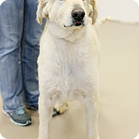 Adopt A Pet :: Wizard - Appleton, WI