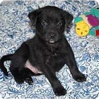 Adopt A Pet :: Eric - Minneola, FL