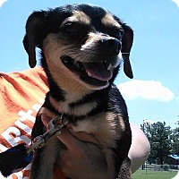 Adopt A Pet :: Miley - Somers, CT