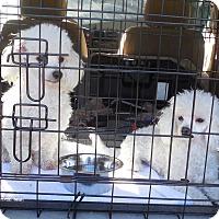 Adopt A Pet :: Angel & Bishop - Ormond Beach, FL