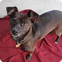 Adopt A Pet :: Blackie - Seal Beach, CA