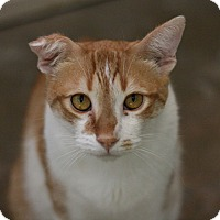 Adopt A Pet :: Butterscotch - Canoga Park, CA