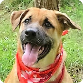 Shepherd (Unknown Type) Mix Puppy for adoption in San Francisco, California - April