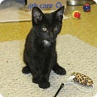 Adopt A Pet :: Blackjack - Denver, CO