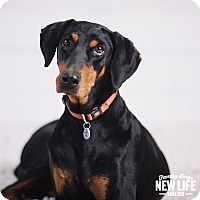 Adopt A Pet :: Faye - Portland, OR
