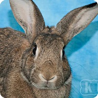 Other/Unknown for adoption in Pflugerville, Texas - Loreal