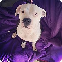 Adopt A Pet :: Kila - oklahoma city, OK