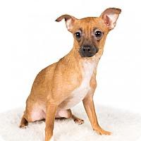 Adopt A Pet :: Tango - St. Louis Park, MN