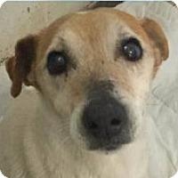 Adopt A Pet :: Rufus - Springdale, AR