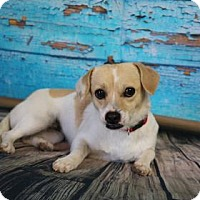 Adopt A Pet :: Clover - Yucaipa, CA