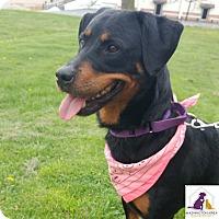 Adopt A Pet :: Hope - Eighty Four, PA