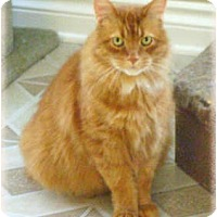 Adopt A Pet :: Hunter - Howell, MI