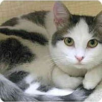 Adopt A Pet :: Violet - Markham, ON