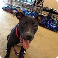 Adopt A Pet :: Sawyer - Glenview, IL